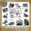 Frogs and Toads by Laurie Ann Phinney