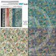Fairy Garden Scrapbook Papers by Vicki Stegall at Oscraps details 1