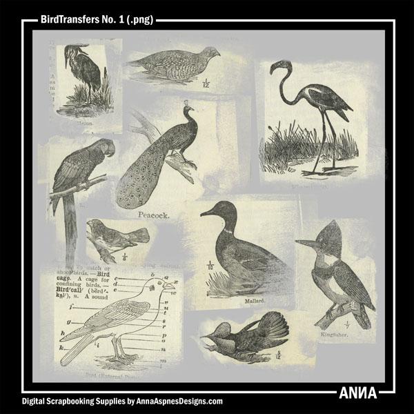 BirdTransfers No. 1