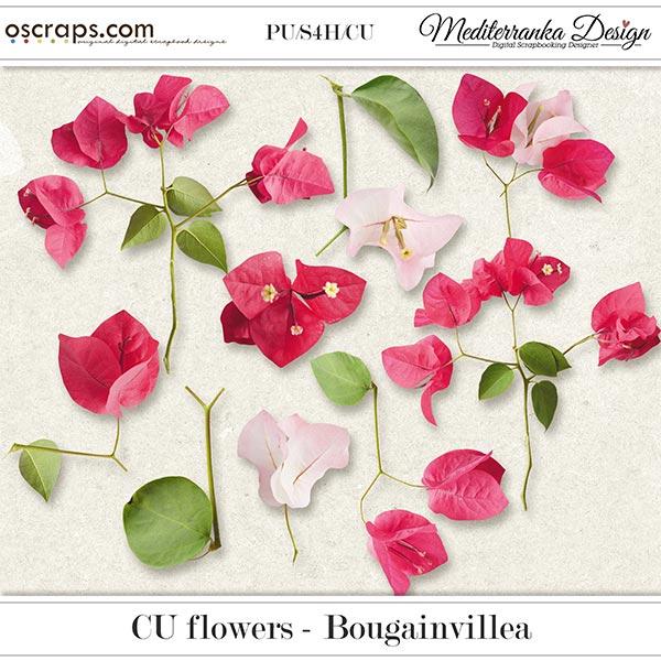 CU flowers - Bougainvillea
