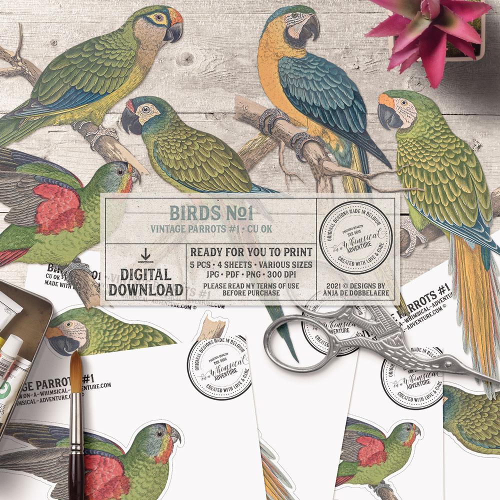 CU Birds No1