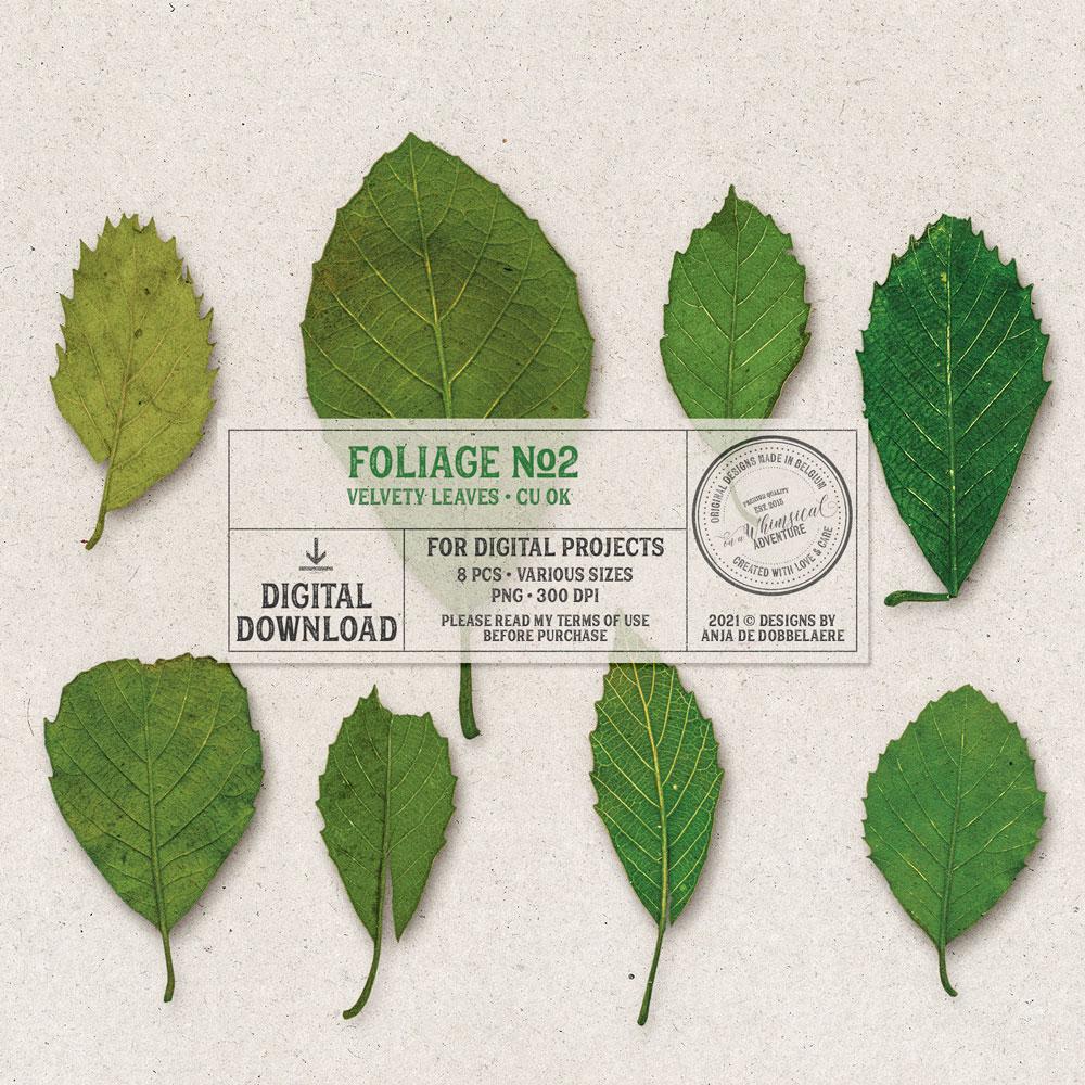 CU Foliage No2