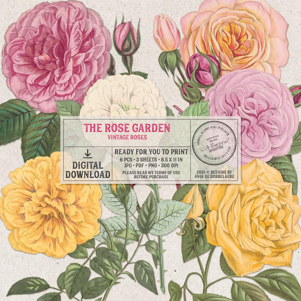 The Rose Garden Vintage Roses