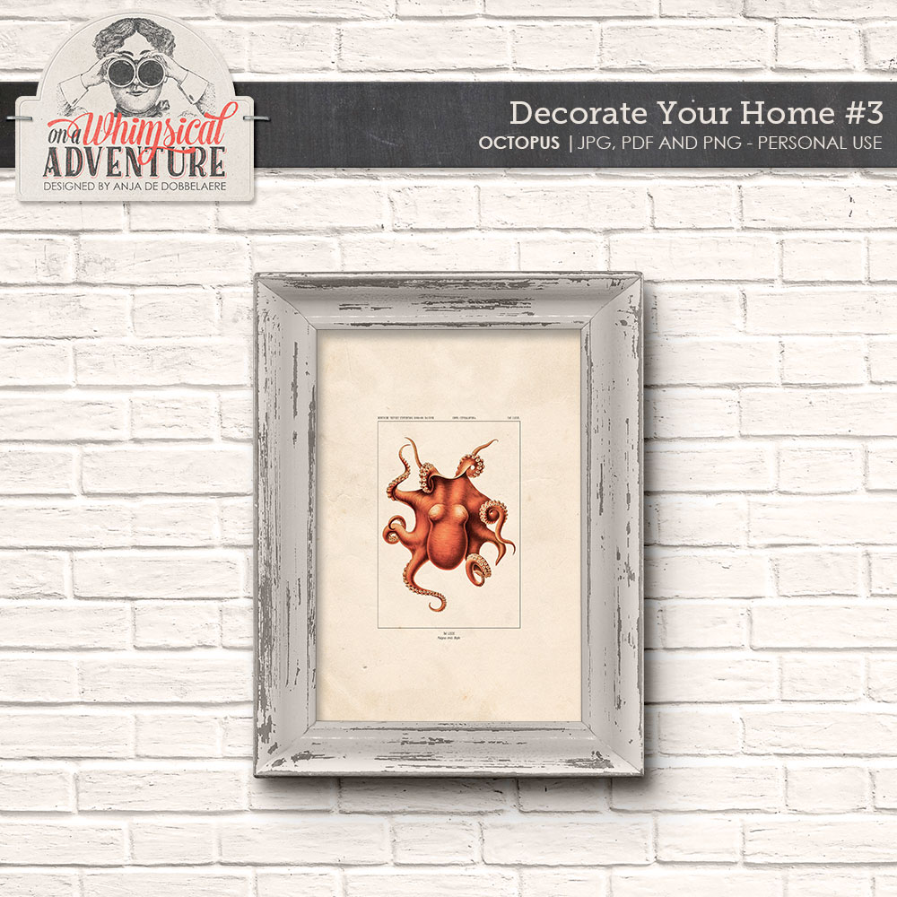 Decorate Your Home 3 Cephalopoda