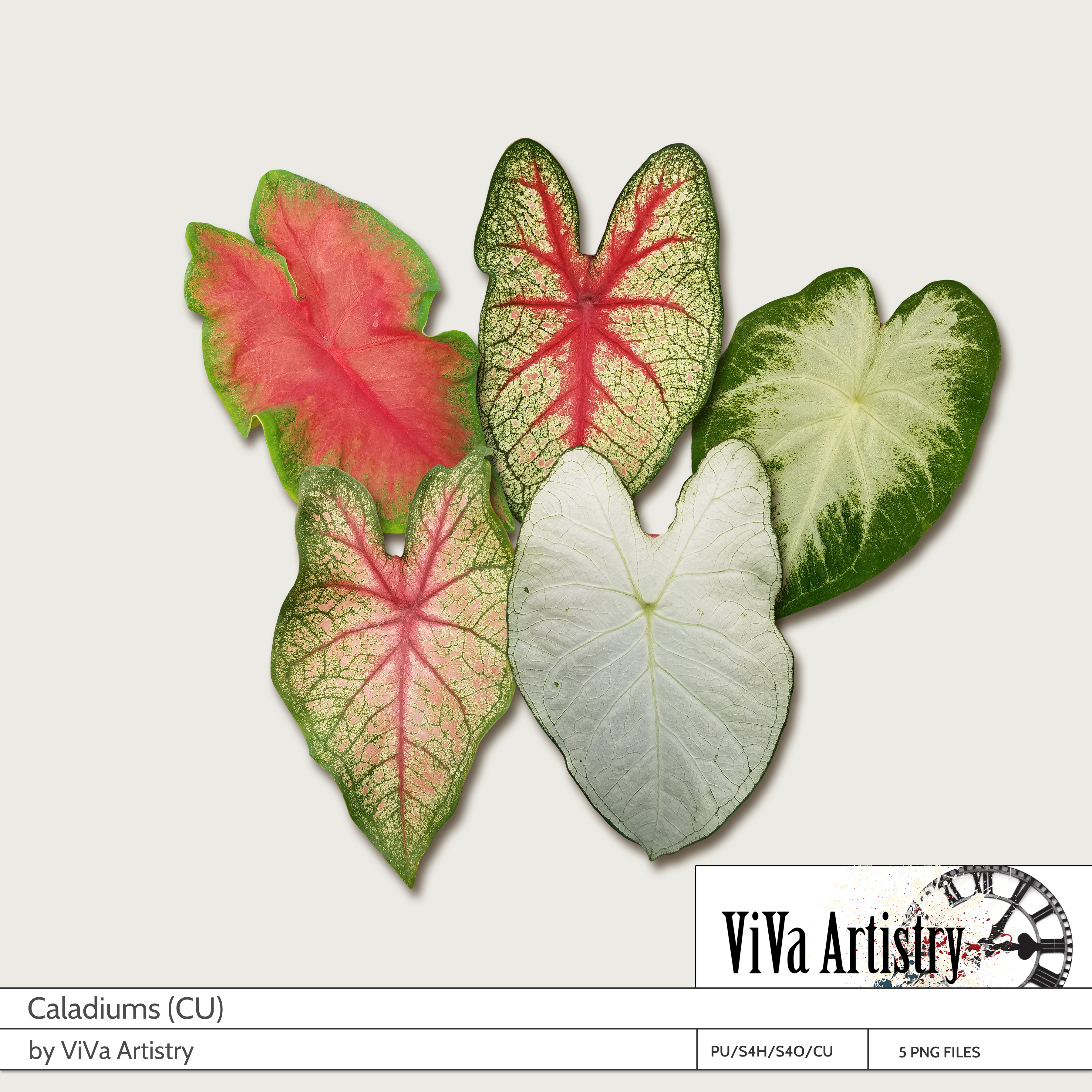Caladiums (CU)