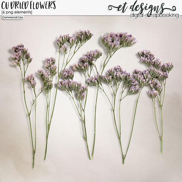 CU Dried Flowers