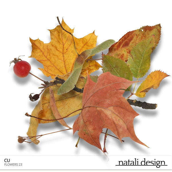 CU Leaves Fall