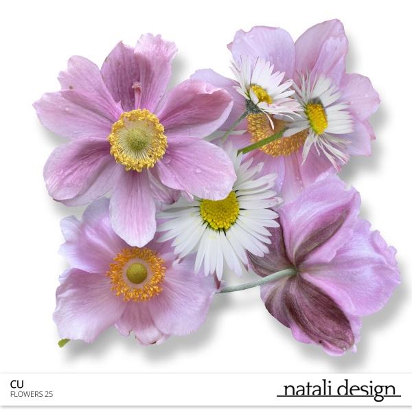 CU Flowers 25