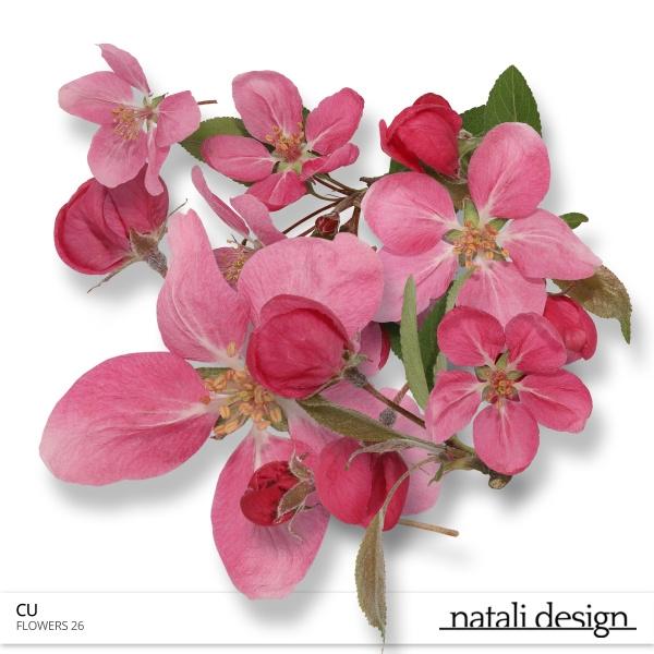 CU Flowers 26