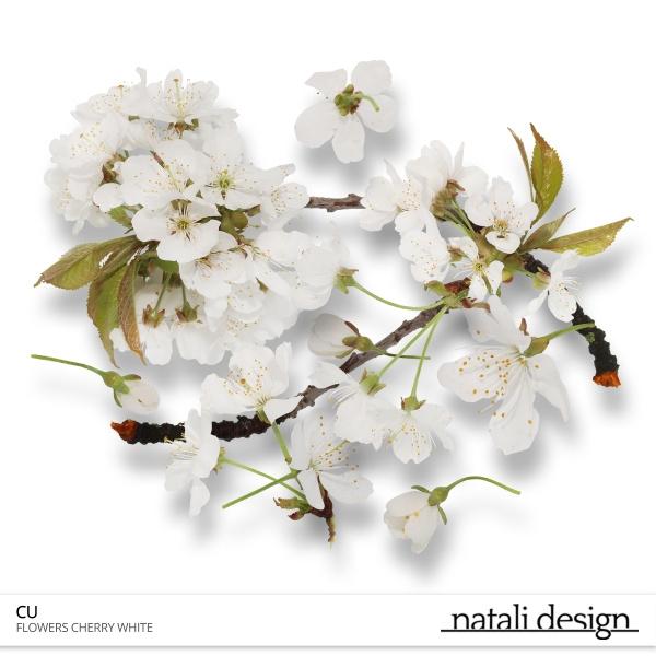 CU Flowers Cherry White