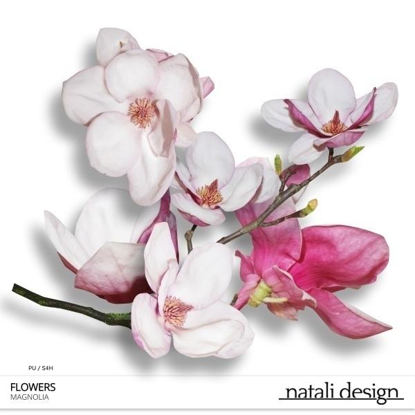CU Flowers Magnolia