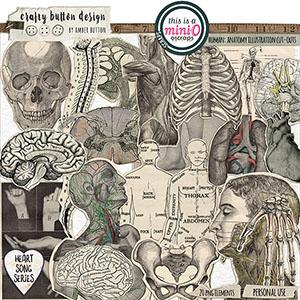 Human Anatomy Illustration Cut Outs
