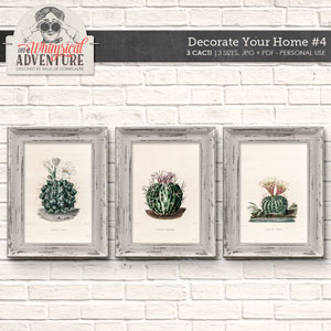 Decorate Your Home 4 Cacti