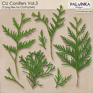 CU Conifers 3