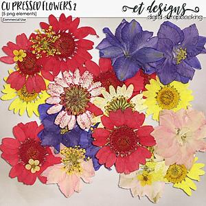 CU Pressed Flowers 2
