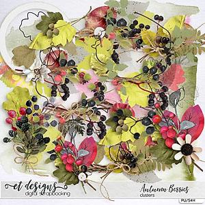 Autumn Berries Clusters