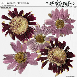 CU Pressed Flowers 5