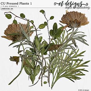 CU Pressed Plants 1