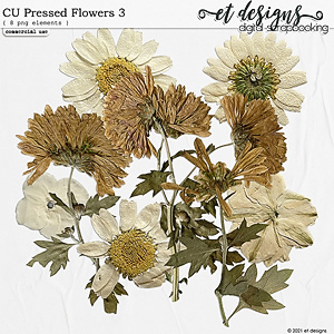 CU Pressed Flowers 3