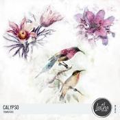 Calypso - Transfers